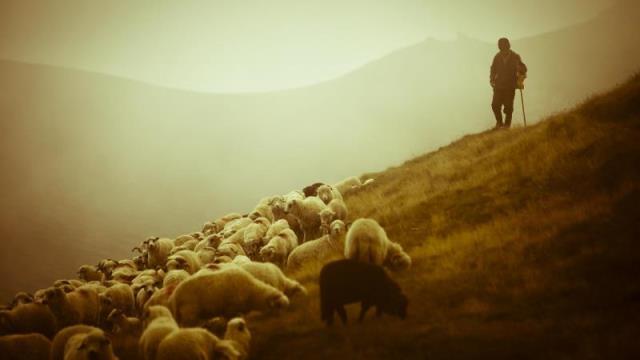 27-pastor_ovelhas-b
