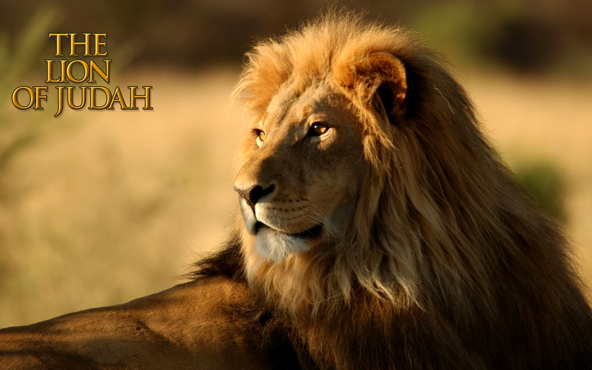 Lion-Of-Judah-HD-Wallpaper