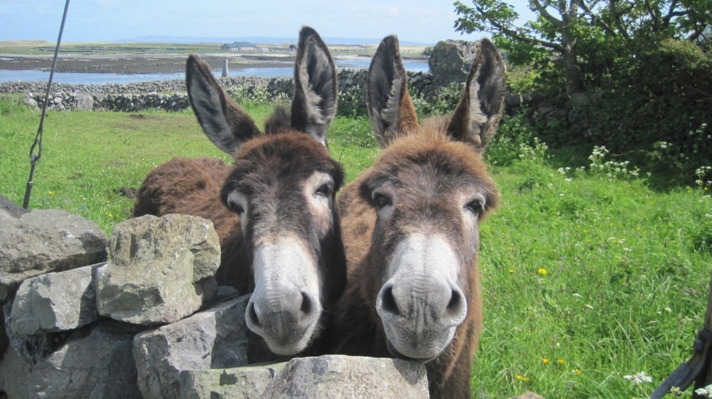 Double-donkeys-24-May-2013-25-1024x574
