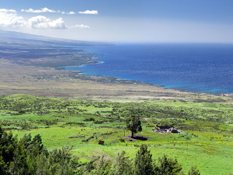Kohala Mountain Road