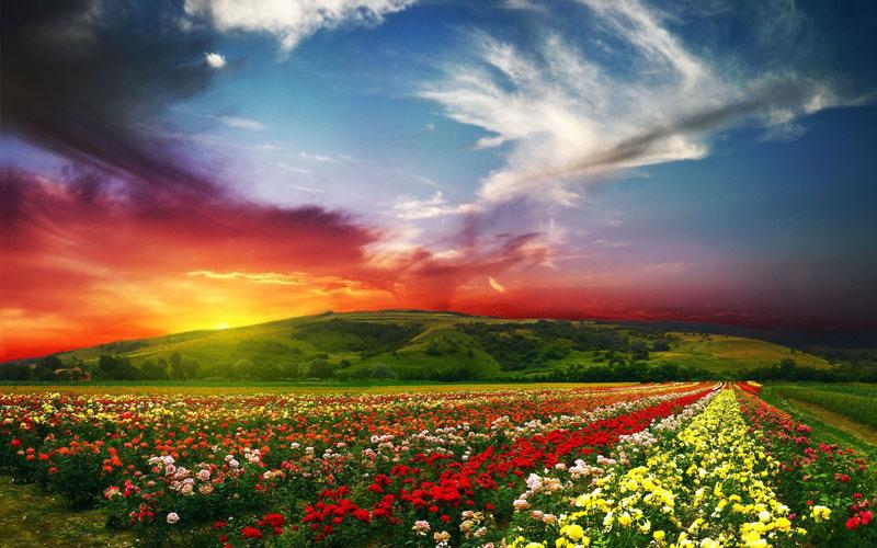 sunset_paradise